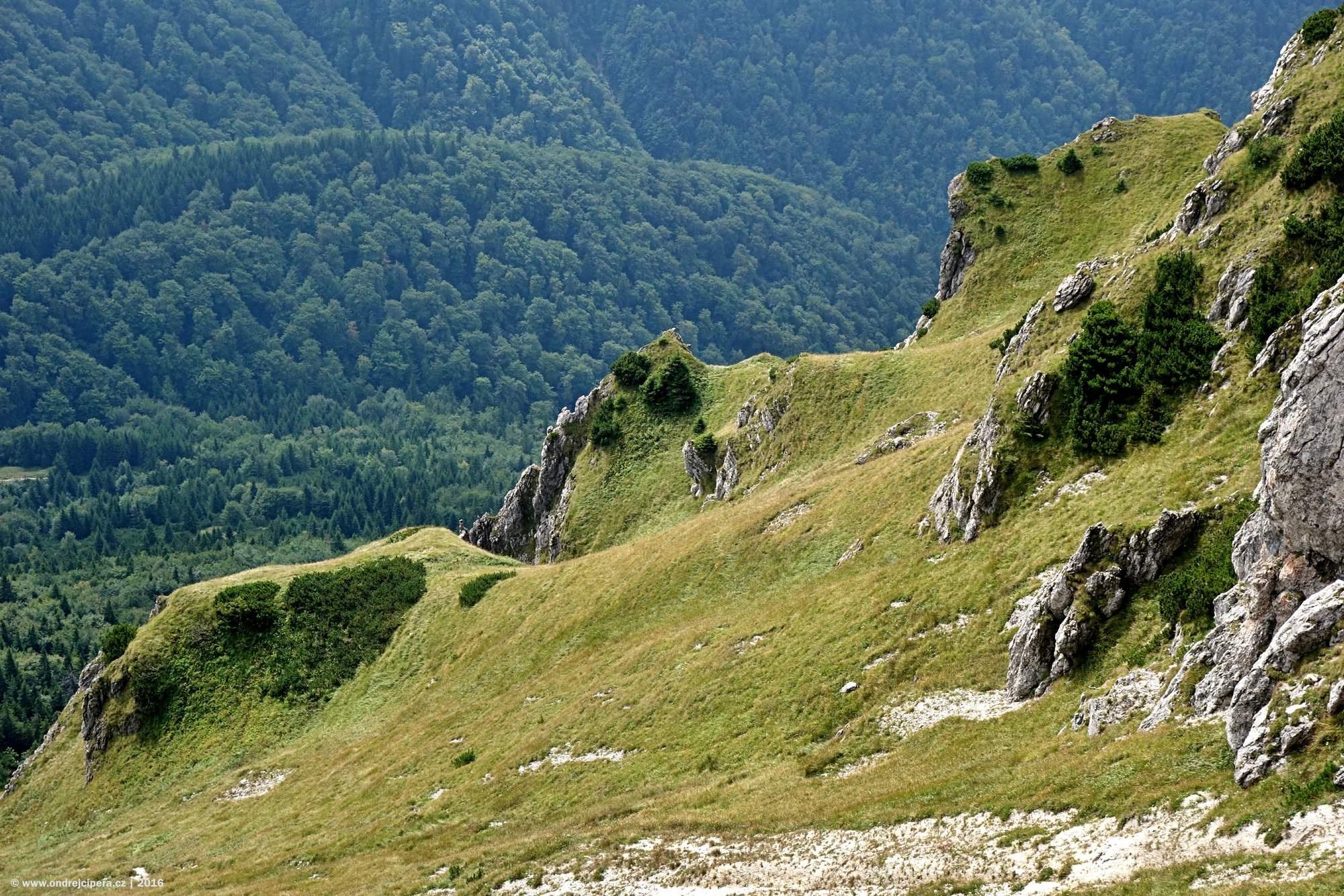 """""""Hrbolatý koberec"""" - Velký Rozsutec 1609 m n.m., Malá Fatra, Slovensko"""