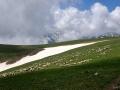 Pasoucí se ovce pod mraky zahaleným vrcholem Titov vrv vysokým 2747 m n.m., druhým nejvyšším vrcholem Makedonie.