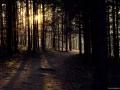 Podzim v lese, Lelekovice, Babí lom
