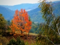 """""""Barvy podzimu"""" - Vysočina"""
